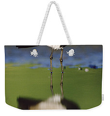 Spur Winged Plover With Its Reflection Weekender Tote Bag
