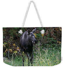 Weekender Tote Bag featuring the photograph Sweet Face by Doug Lloyd
