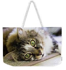 Tabby Cat Looking At Camera Weekender Tote Bag