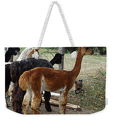 The Cat Came Back Weekender Tote Bag