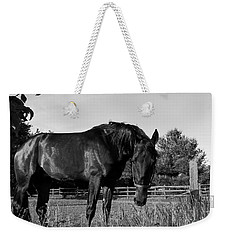 Weekender Tote Bag featuring the photograph The Stallion by Davandra Cribbie
