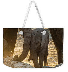 Tiny Trunk Weekender Tote Bag