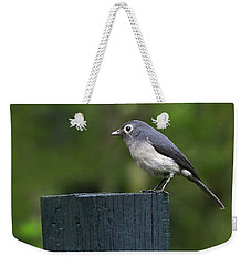 White-eyed Slaty Flycatcher Weekender Tote Bag by Tony Beck