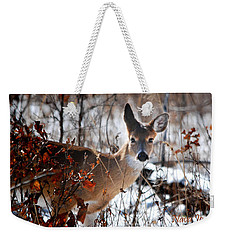 Weekender Tote Bag featuring the photograph Whitetail Deer In Snow by Nava Thompson