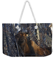 Weekender Tote Bag featuring the photograph Winter Food by Doug Lloyd