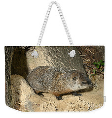 Woodchuck Weekender Tote Bag by Ted Kinsman