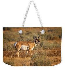 Wyoming Pronghorn Weekender Tote Bag by Ronald Lutz