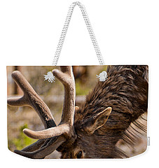 Weekender Tote Bag featuring the photograph Young One by Colleen Coccia