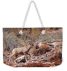 Escalante Canyon Desert Bighorn Sheep  Weekender Tote Bag