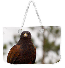 Harris's Hawk Weekender Tote Bag