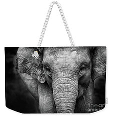 Baby Elephant Weekender Tote Bag by Charuhas Images