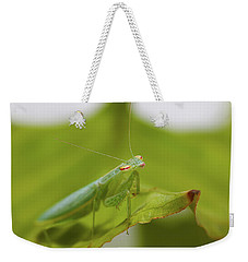 Weekender Tote Bag featuring the photograph Baby Praymantes 6661 by Kevin Chippindall