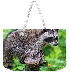 Weekender Tote Bag featuring the photograph Baby Racoon by Paul Freidlund
