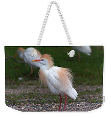 Cattle Egret Walking Close Weekender Tote Bag