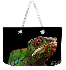 Closeup Head Of Panther Chameleon, Reptile In Profile View Isolated On Black Background Weekender Tote Bag by Sergey Taran
