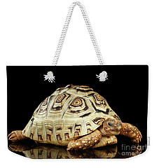 Closeup Leopard Tortoise Albino,stigmochelys Pardalis Turtle With White Shell On Isolated Black Back Weekender Tote Bag