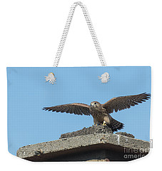 Weekender Tote Bag featuring the photograph Common Kestrel Juvenile - Falco Tinnunculus by Jivko Nakev