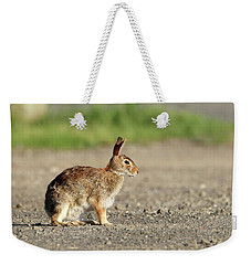 Cottontail Rabbit Stony Brook New York Weekender Tote Bag
