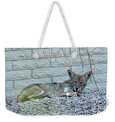 Weekender Tote Bag featuring the photograph Coyote by Anne Rodkin
