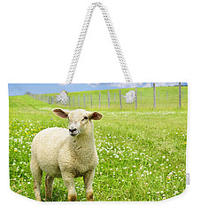 Cute Young Sheep Weekender Tote Bag