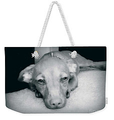 Day Dreaming Doxie Weekender Tote Bag