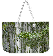 Delicate Aspens. Colorado Weekender Tote Bag