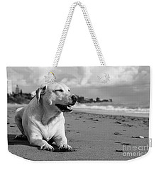 Dog - Monochrome 5  Weekender Tote Bag