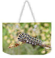 Eastern Black Swallowtail Caterpillar  Weekender Tote Bag