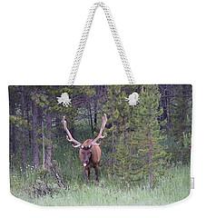 Bull Elk Rocky Mountain Np Co Weekender Tote Bag