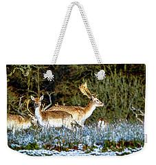 Fallow Deer In England Weekender Tote Bag