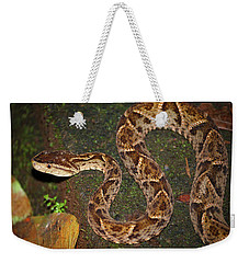 Fer-de-lance, Bothrops Asper Weekender Tote Bag