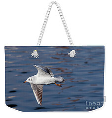 Flying Gull Above Water Weekender Tote Bag by Michal Boubin
