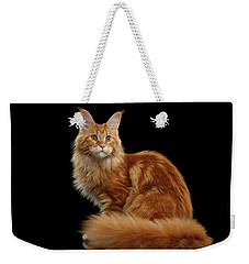 Ginger Maine Coon Cat Isolated On Black Background Weekender Tote Bag