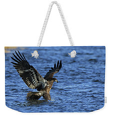 Weekender Tote Bag featuring the photograph Juvenile Eagle Fishing by Coby Cooper