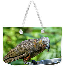 Weekender Tote Bag featuring the photograph Kaka by Patricia Hofmeester