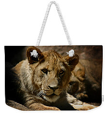 Lion Cub Weekender Tote Bag by Anthony Jones