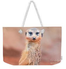 Meerkat Weekender Tote Bag by Stephanie Hayes