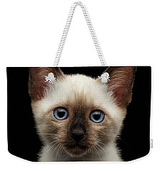 Mekong Bobtail Kitty With Blue Eyes On Isolated Black Background Weekender Tote Bag