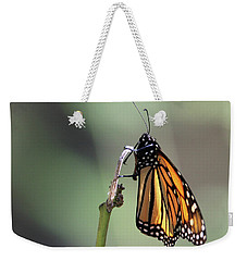 Monarch Butterfly Stony Brook New York Weekender Tote Bag