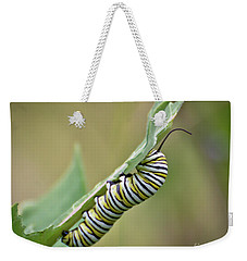 Weekender Tote Bag featuring the photograph Monarch Caterpillar by Kerri Farley