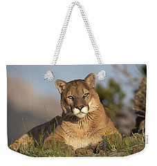 Weekender Tote Bag featuring the photograph Mountain Lion Portrait North America by Tim Fitzharris