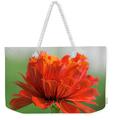 Weekender Tote Bag featuring the photograph Red Zinnia  by Jim Hughes