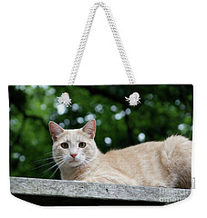 Orange Tabby Weekender Tote Bag