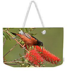 Orchard Oriole  Weekender Tote Bag by Alan Lenk