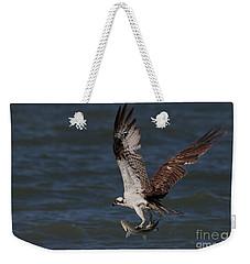 Osprey In Flight Weekender Tote Bag by Meg Rousher