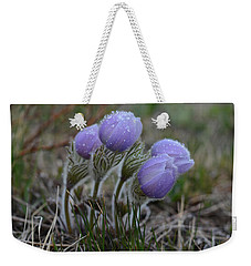 Pasque Flowers  Weekender Tote Bag