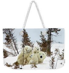 Weekender Tote Bag featuring the photograph Polar Bear Ursus Maritimus Trio by Matthias Breiter