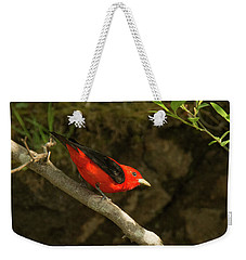 Scarlet Tanager Weekender Tote Bag by Alan Lenk