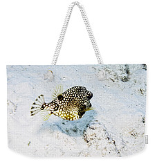 Weekender Tote Bag featuring the photograph Smooth Trunkfish by Perla Copernik