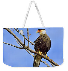 Weekender Tote Bag featuring the photograph Southern Comfort by Tony Beck